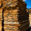 wood stacked for air drying