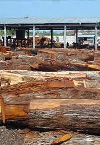 Mahogany logging