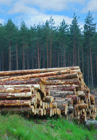 logs stacked in forest