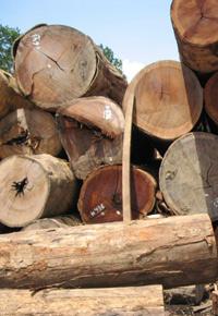 Stack of Ipe logs