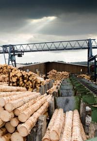 lumber sawmill