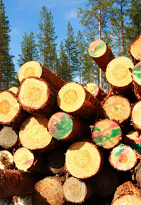 logging trees